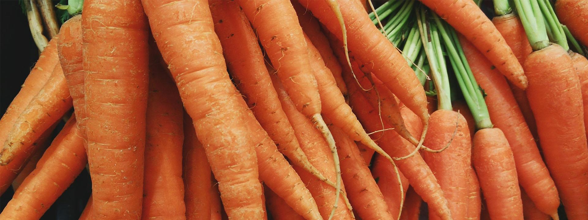 Выращивание моркови как бизнес: организация и план - бизнес идеи 57